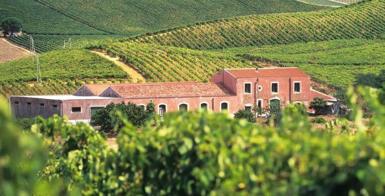 Vista de vinícola