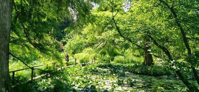 Lago e árvores no Orto Botânico di Lucca