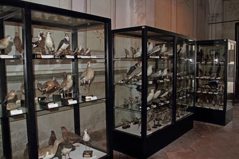 Aves expostas no Museu de Ornitologia