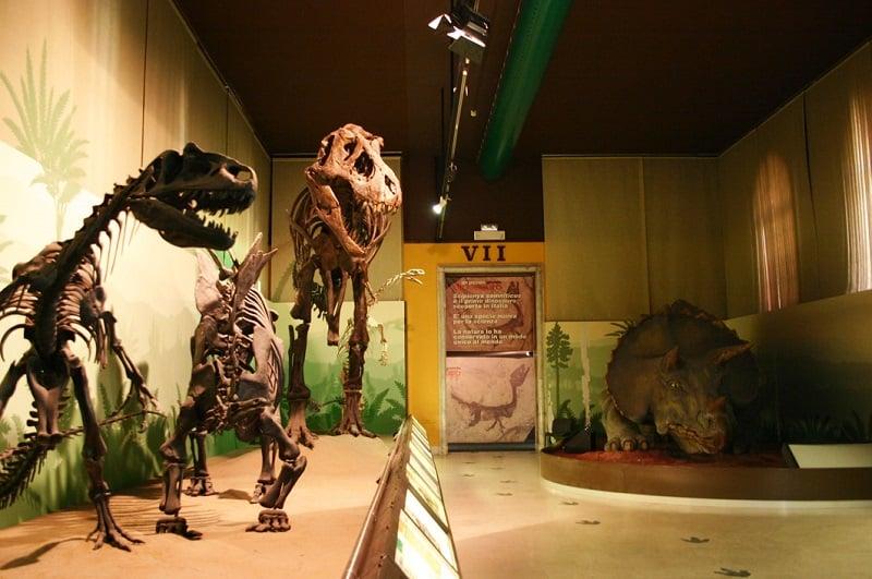 Esqueletos de dinossauros expostos no museu