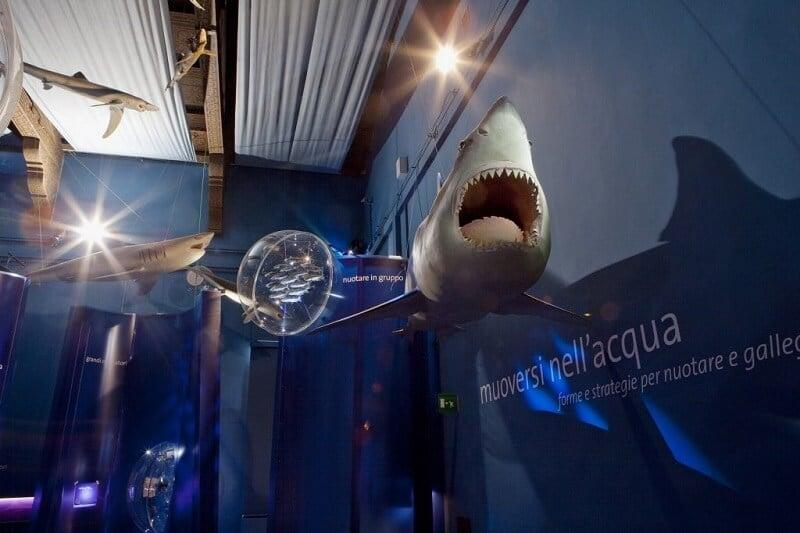 Representações de animais expostas no Museu de História Natural de Veneza